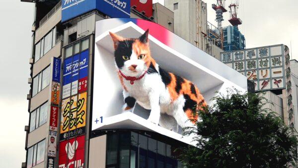 3D-cat-